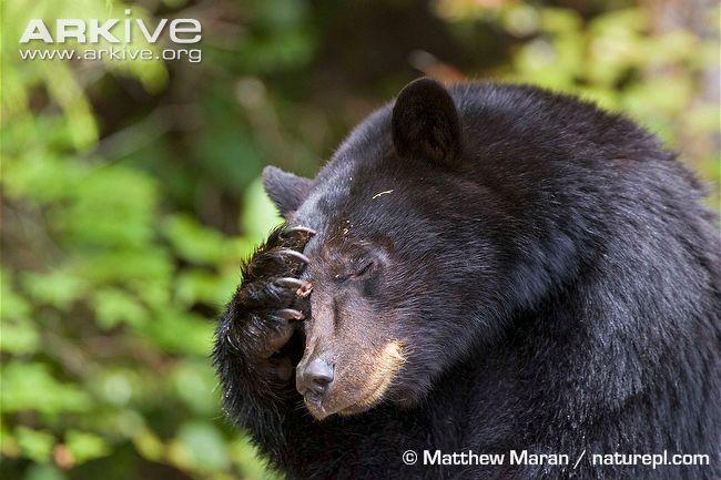 dannos-bear-sonny
