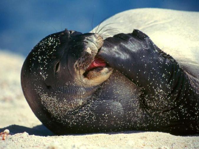 konos-seal-sophia